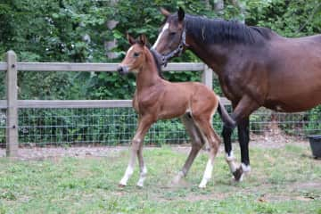 So Lovely and little colt