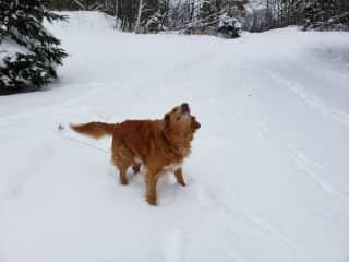 Poppy; enjoying the Snow Up North!