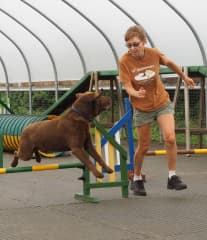 Taking Bruno through his paces at agility training
