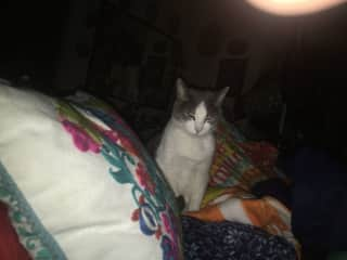 Midori, My Kitty