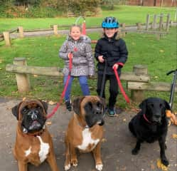 Buddy & Blue on a walk with my niece and nephew and their dog Poppy.  Buddy & Blue absolutely love the kids, all they do together is play.