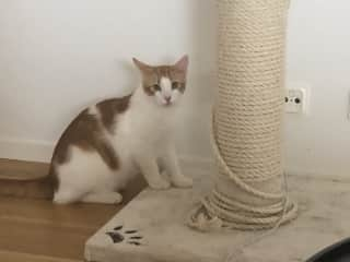 My new giant cat pole which broke in one week