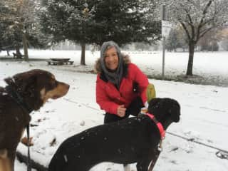 Walking Frida and Roy on a snowy Nelson day.