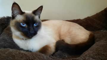 Baby blue eyes <3 She is very playful and sweet, but can be shy at first.