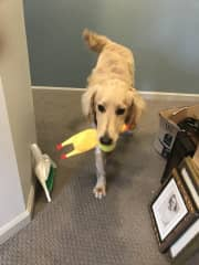 Benson and rubber chicken