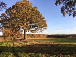 the farm in autumn