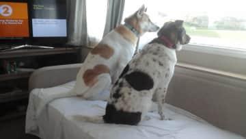 On guard at the van!