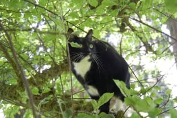 Loquita enjoying some tree time