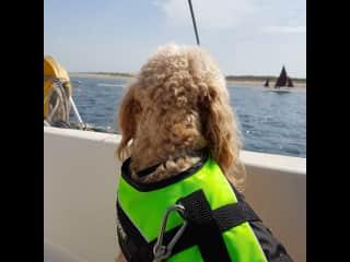 I'm a real sea-dog with a life jacket