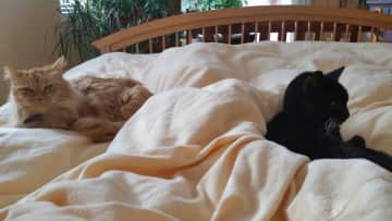 Sharing the bed!