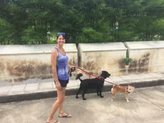 Melissa walking Bella and Boonchou. Petsitting in Chiang Mai, Thailand