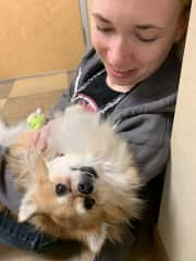 Our pup Benji experienced an autoimmune related health crisis in January 2019 - here he is in the hospital, poor guy. We nursed him back to health through diet and nutrition changes - and are glad to report he's been symptom free for over a year!