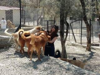 Volunteering at a Dog Shelter in Turkey