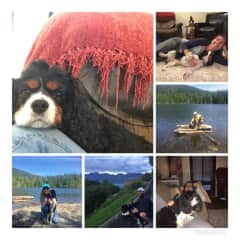 Dog sitting Clarence on Bowen Island
