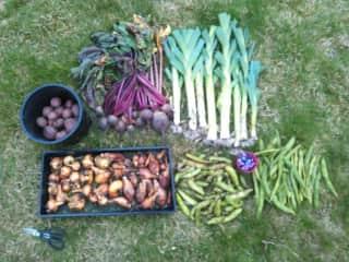 My beautiful garden bounty!