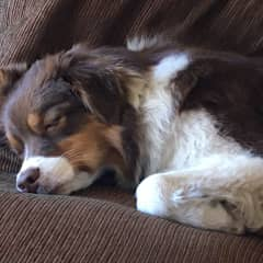 Asleep on the couch