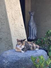 Patches...live sculpture. She likes to hunt so wants to be outside in the daytime.  We bring her in at night...Coyotes!