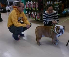 We love seeing Butters at local bulldog rescue group events.