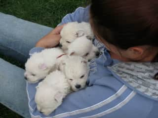 Me with puppies