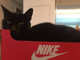 We keep a shoebox in our kitchen that he sits in when we're cooking.