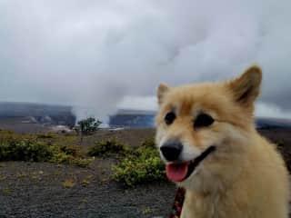Volcano Park - with adorable Kea, Hawaii Island