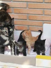 My cat Face with her babies. The blondy is Tom,
