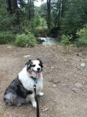 Kathryn dog sitting for Sidney for 3 1/2 weeks