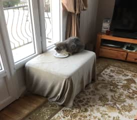 Bobby eating Harry's breakfast of fish, he loves looking out the window and he is amazed his estate is in view