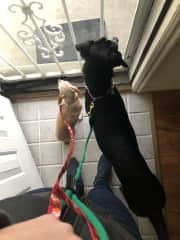 Minnie and Lucky ready for a walk