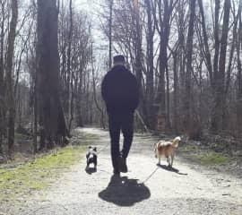 Petsitting in Munich: Beagle Mix Ty and Chihuahua Whiskey
