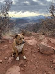 Sammy on our favorite weekly hike
