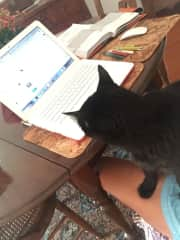 Love it when my pets volunteer to help me working. Sweet Tommy at service...