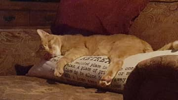 """Our cat Dexter taking a nap on our """"retreat"""" pillow"""