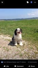 Teddy our family dog