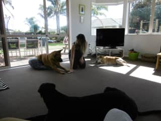 Me looking after three dogs in NZ