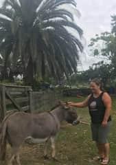 The original Wonkey Donkey, Pearl - Auckland NZ (2018)