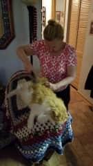 Judith's Feline Beauty Salon in Atlantic Beach, FL