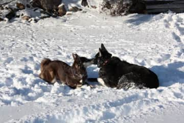 2014 -Cannelle and Phoenix enjoying the snow. I dogsat Phoenix several times while her owner was away.