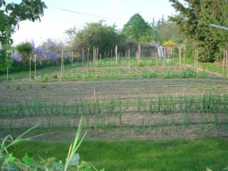 Our walled vegetable garden
