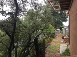 South side of the house. There are 3 greenhouses amongst fruit trees in the side yard