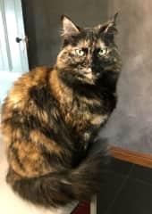 Matilda (Tilly)