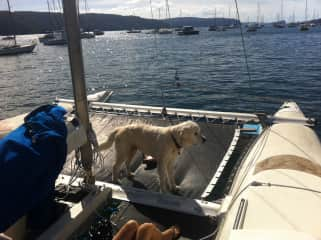Samson loved coming sailing with us
