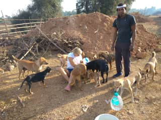 Volunteering with stray dogs in Goa (India)