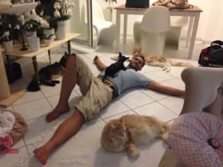 my husband Mirko cat-sitting with our Louis and three Maine Coon cats