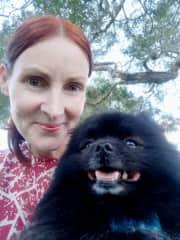 Sabre _pomeranian 3 year old dog -_Pet/house sit Camphill QLD Mar 2021