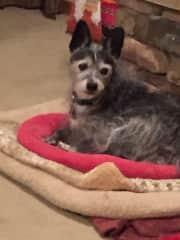 Lola -I like to get treats