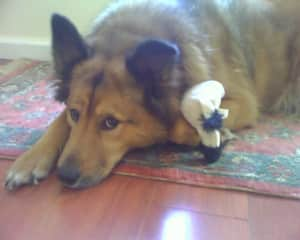 Our beloved dog Judah was the best! We believe that he acutally thought he was a human. He always ignored other dogs - He just wanted to play with us humans!
