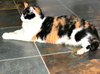 This is our gorgeous Tigger. RIP