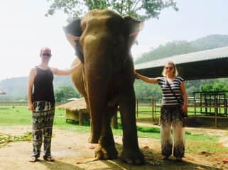 Volunteering at Elephant Nature Park, Thailand