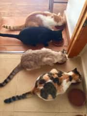 Rocky, Chevy, Jaz & Daisy (top to bottom)